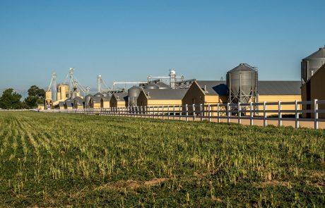 Morning Fresh Farms On the Farm