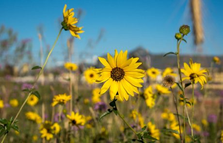 Morning Fresh Farms Wild Flower